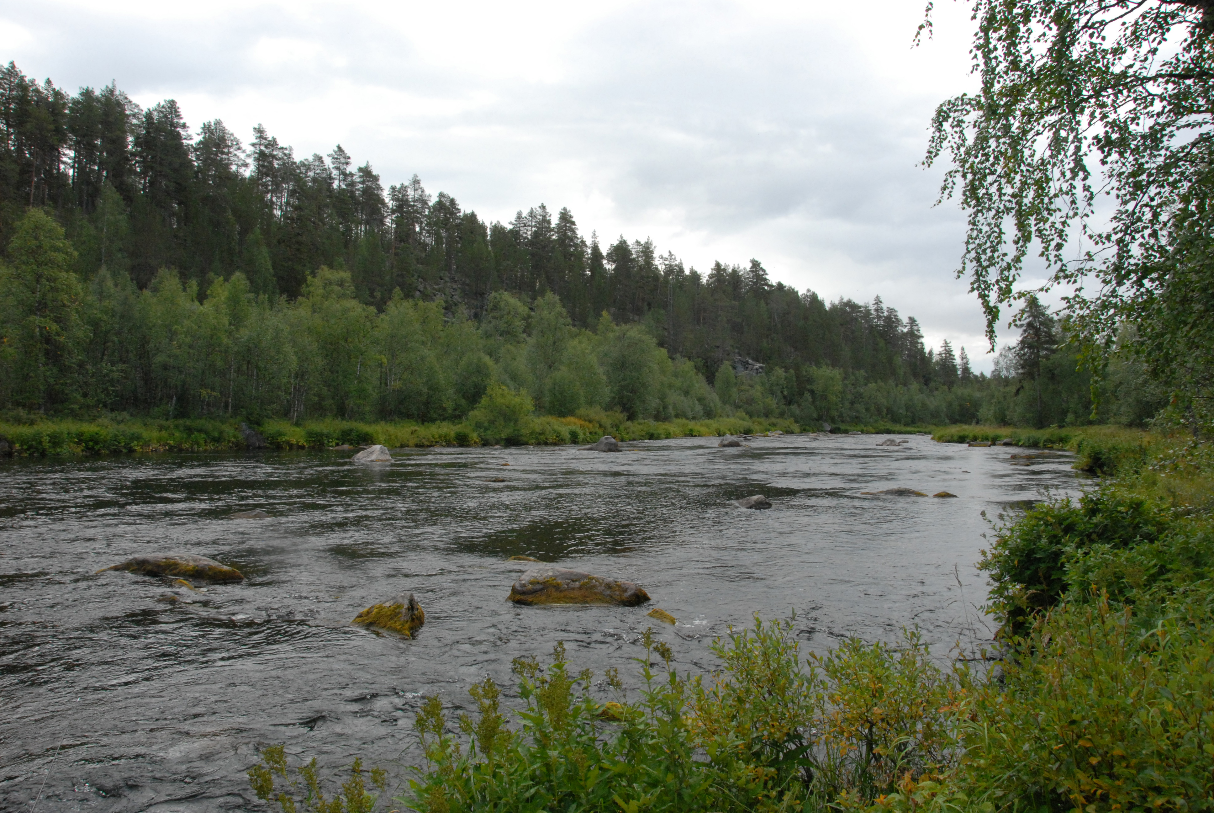 Nuorttijoki, Nuorttiköngäs